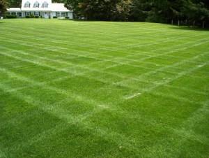http-::hyrbrix.com:wp-content:uploads:2013:03:lawn-big