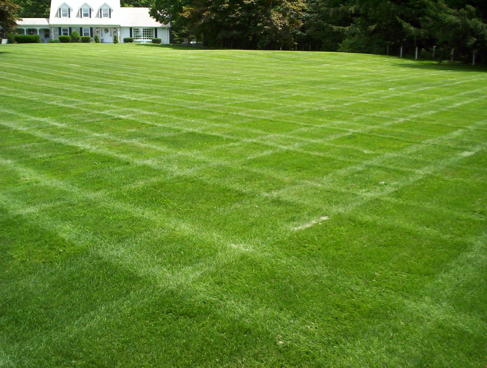 Image result for nice lawns
