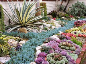 http-::img.photobucket.com:albums:v115:HoovB:blog:forJan2011:ShermanSucculents6386